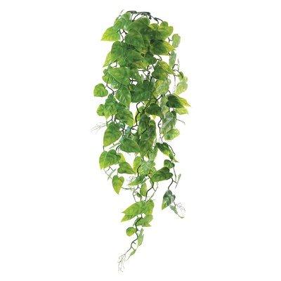Растение «Сциндаптус», 60 см