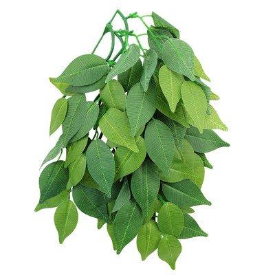 Растение «Фикус»