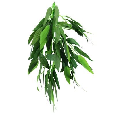 Растение «Рускус»